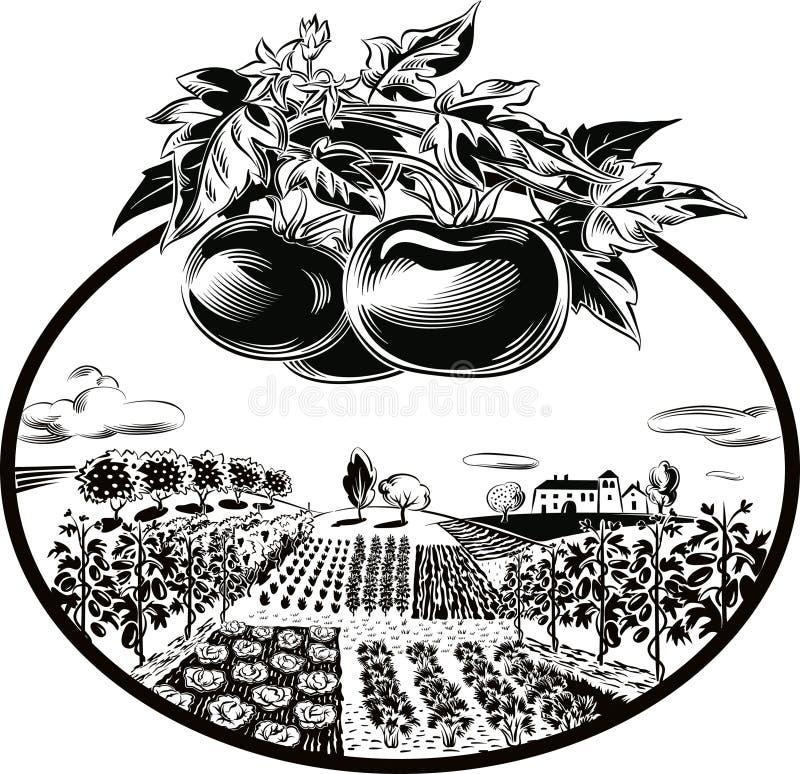 krajobrazu rolniczego Najpierw pomidoru plan royalty ilustracja