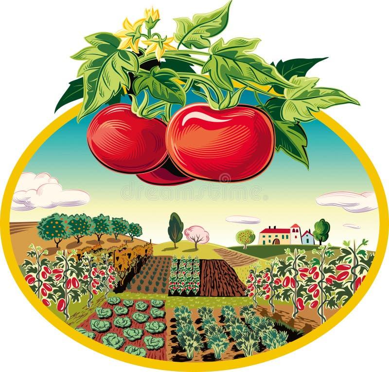 krajobrazu rolniczego Najpierw pomidoru plan ilustracji