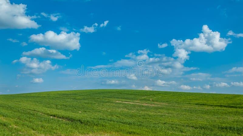 krajobrazu rolniczego piękny zieleni pole pod błękitnym chmurnym niebem krótkopędy zbożowe uprawy obrazy royalty free