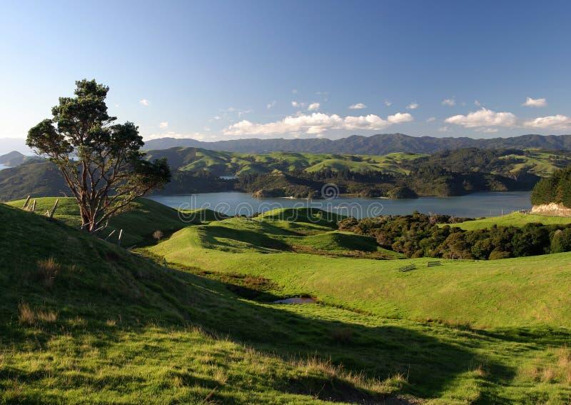 krajobrazu wiejskiego nowe Zelandii fotografia royalty free