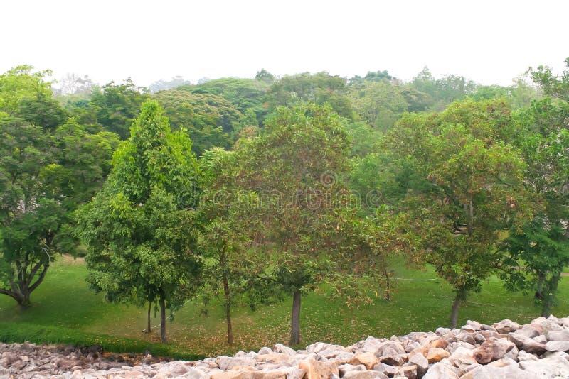 Krajobrazy obrazy stock