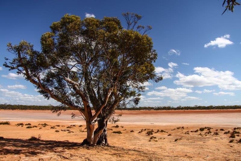 Krajobrazy Australia zdjęcie stock