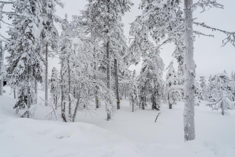 Krajobrazy w Lapland blisko Sirkka, Finlandia obrazy royalty free