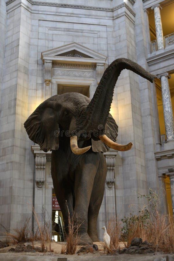 Krajowy historii naturalnej muzeum obraz royalty free
