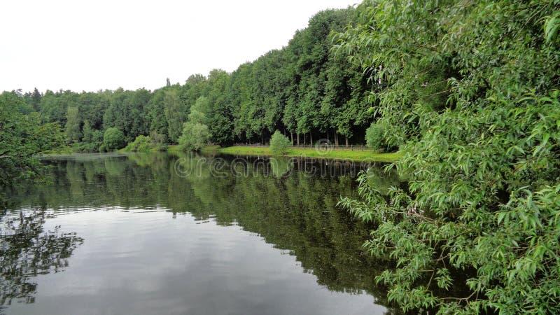 Krajowy Rosyjski watter drzewo cześć fotografia stock