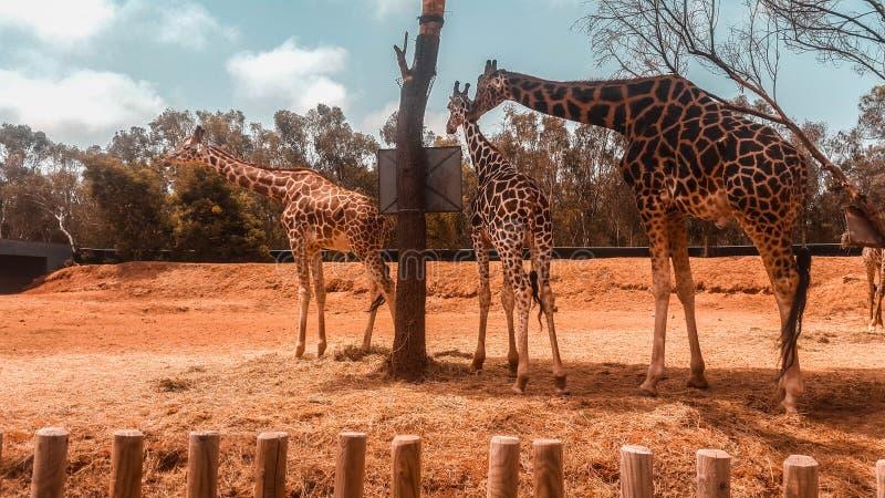 Krajowy zoo Rabat zdjęcia royalty free