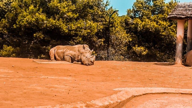 Krajowy zoo Rabat fotografia stock