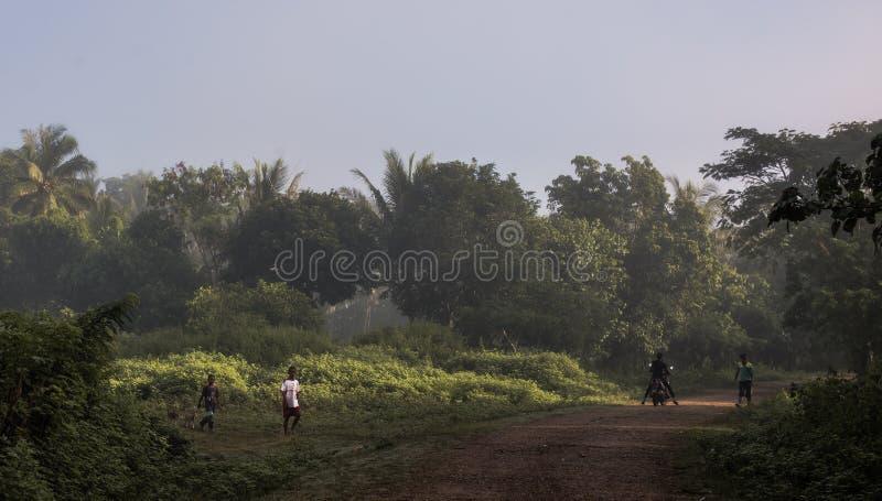 Kraju życie w tropikalnym fotografia stock