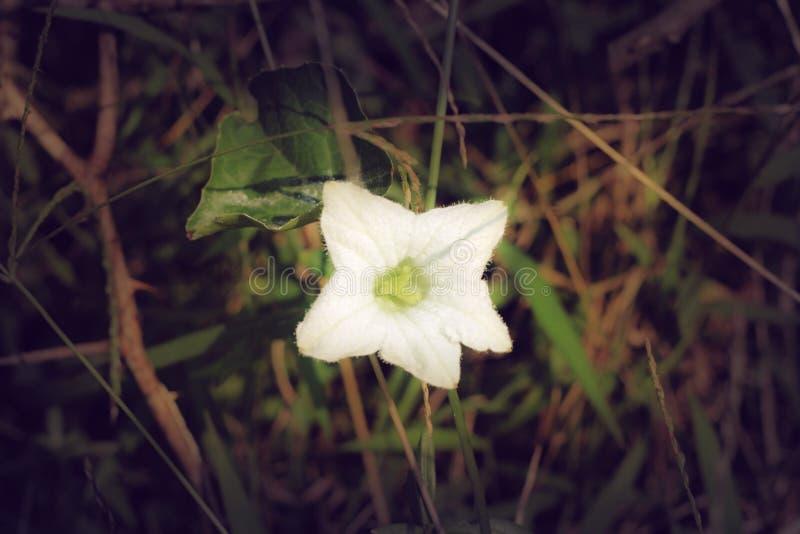 kraju kwiat kwitnie tropikalnego biel jak jak ja jesteśmy przyglądający my obraz stock