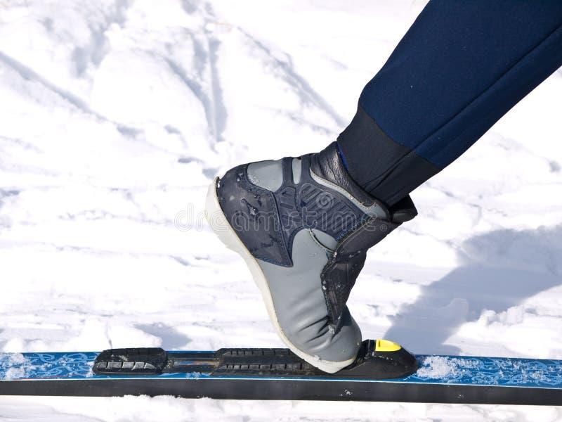 kraju narciarstwo przecinający północny zdjęcia royalty free