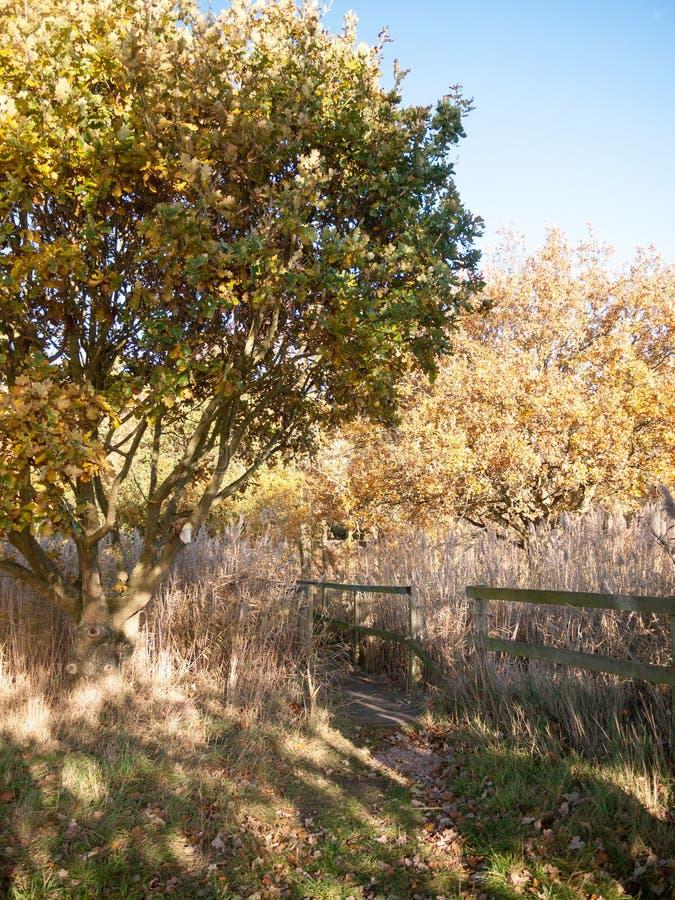 Kraju przejścia ścieżki drewnianej rezerwowej drzewnej jesieni żółty złoty los angeles obrazy stock