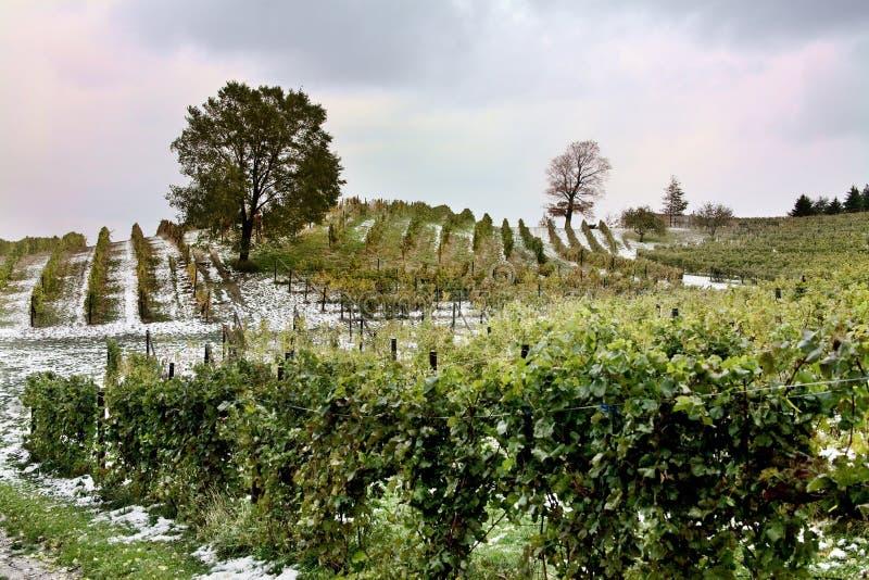 kraju wina zima obrazy stock