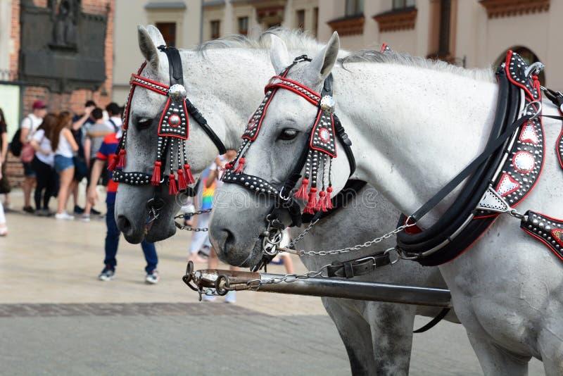 Touristic horse-drawn carriage. Detail. Main market square. Krakow. Poland stock photography