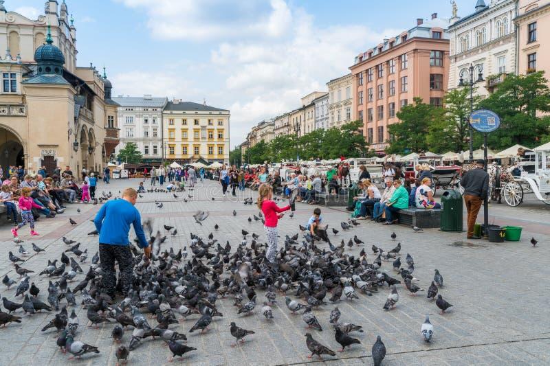Krakau am 21. August 2017: scherzt Fütterungstauben auf dem 'Ã Rynek GÅ ³ wn lizenzfreie stockbilder