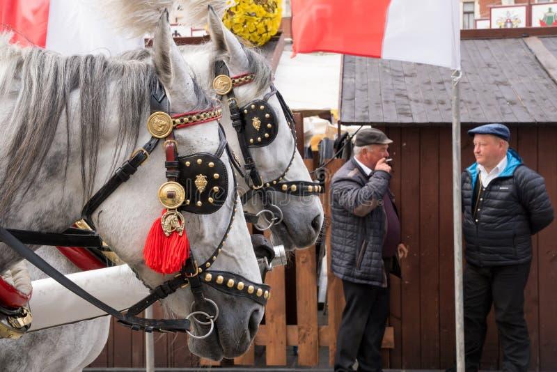 Krakau, Polen - 3. Mai 2015: festliche gekleidete Pferde, die einen Wagen in alter Stadt Krakaus während des Konstitutions-Tages  stockfotografie