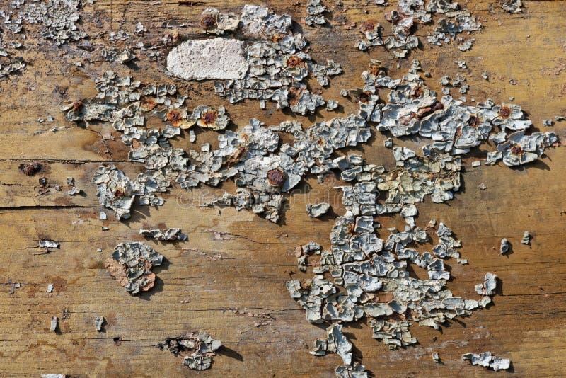 Krakingowa błękitna farba na starym drewnianym starzejącym się sosnowym drzwi zaszaluje tło obraz stock
