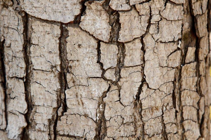 Krakingowa drzewna barkentyna w górę stary tekstury drewna Tło fotografia stock