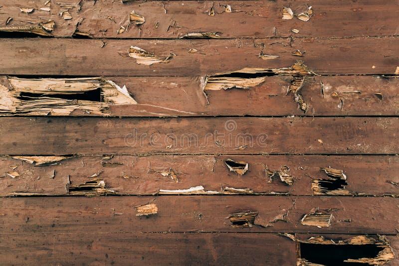 Krakingowa malująca drewno powierzchnia fotografia royalty free