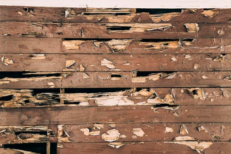 Krakingowa malująca drewno powierzchnia obrazy royalty free