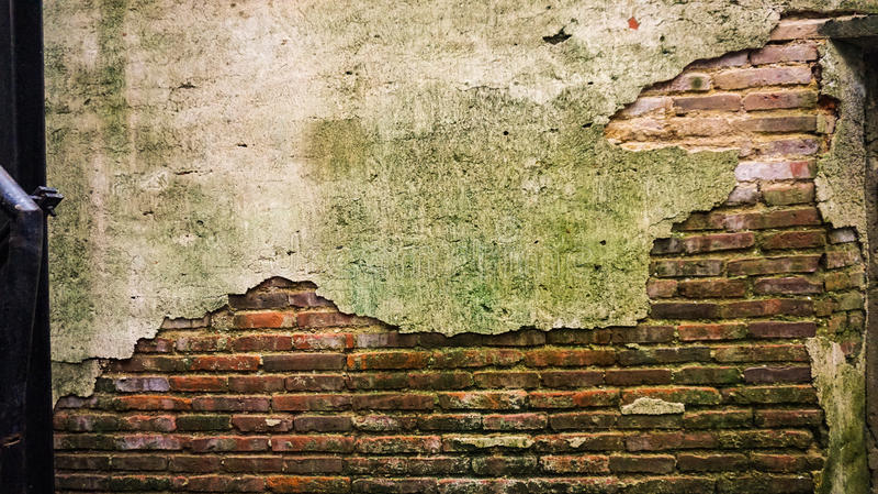 Krakingowa stara cegła i betonowa ściana zakrywający z mech t i drzewem zdjęcie stock