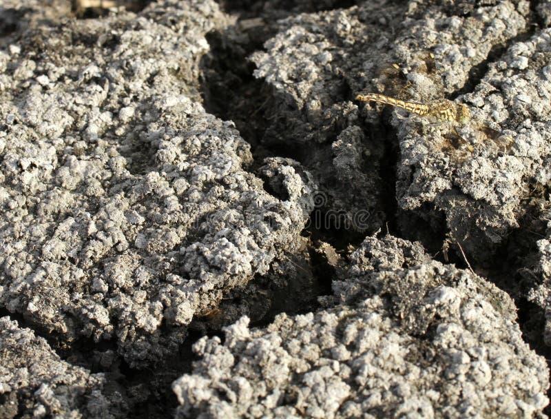 Krakingowy słońce pękał ziemię z dragonfly obsiadaniem na nim, tekstura fotografia stock