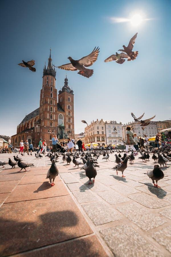 Krakow, Poland. Doves Birds Flying Near St. Mary`s Basilica. Pig stock photos