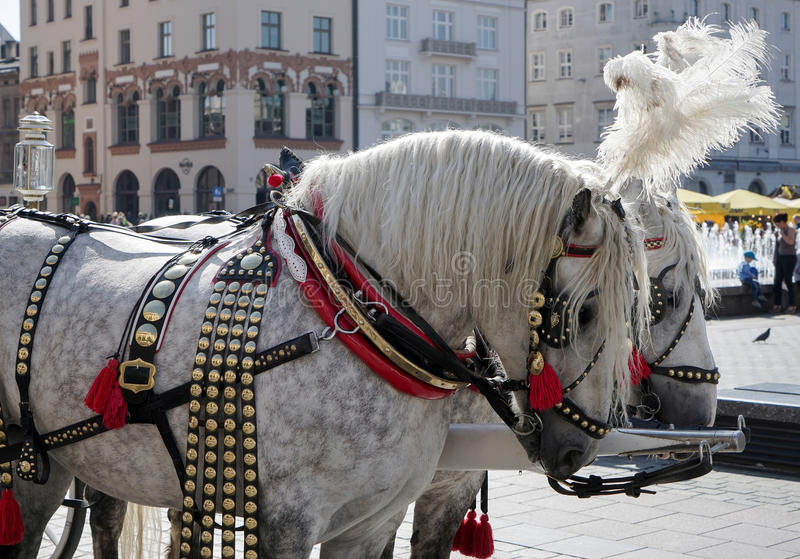 KRAKOW, POLAND/EUROPE - SEPTEMBER 19 : Decorated horses in Krakow Poland on September 19, 2014. Unidentified people. stock photo