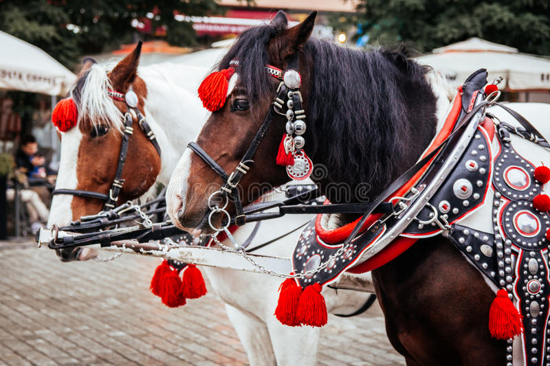Krakow, Poland - 19th October 2016. Closeup of a pair of horses stock photo