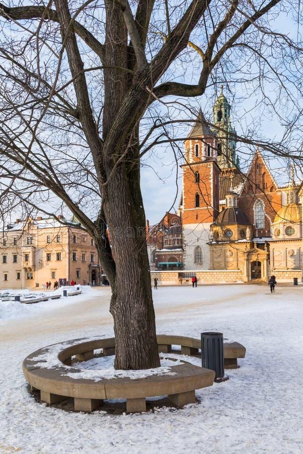 krakow Poland Wawel drzewo na kwadracie i kasztel fotografia royalty free