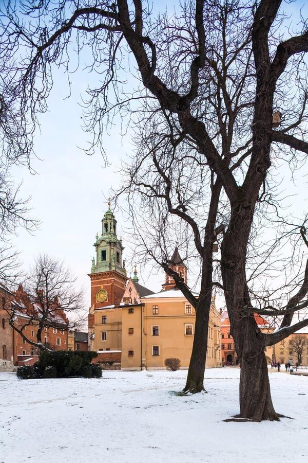 krakow Poland Wawel Grodowy i stary drzewo zdjęcie royalty free