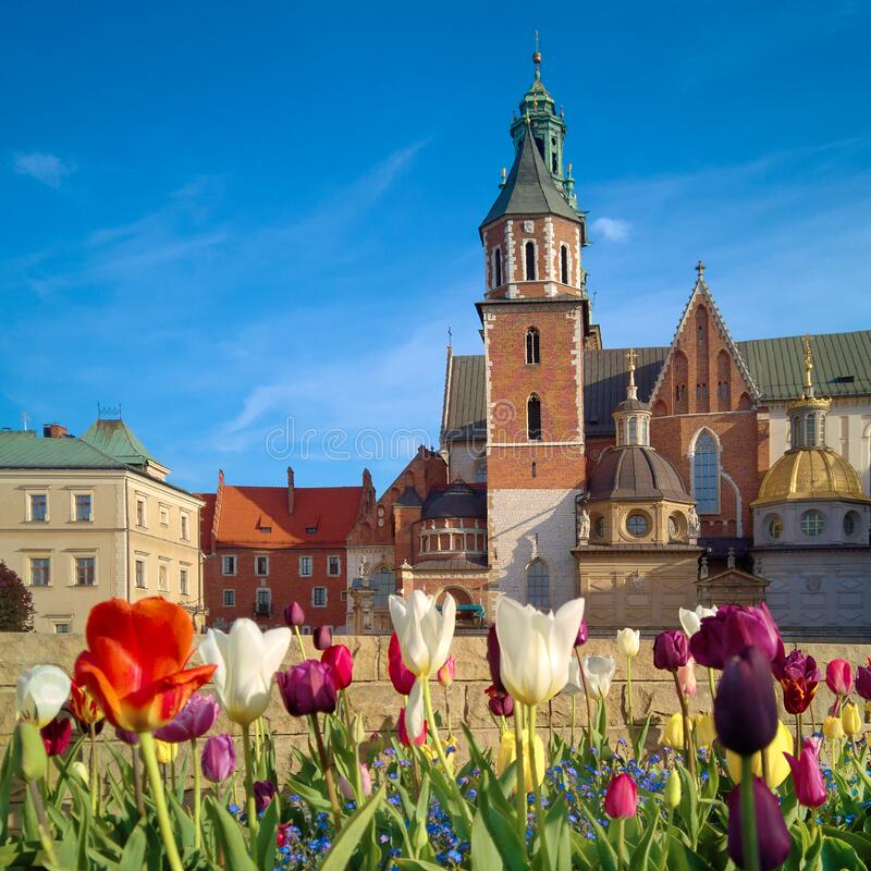Krakow, tulips in front of Wawel castle. Square composition royalty free stock image