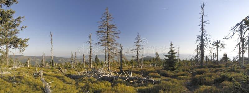 kralicky gammal sneznik för skog royaltyfri foto