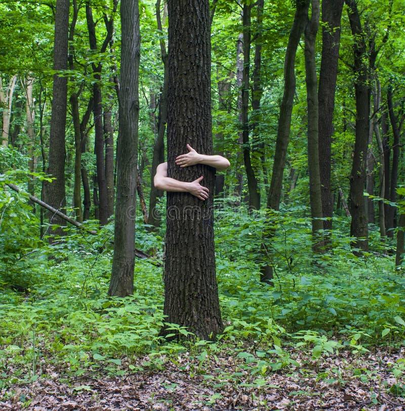 krama treen Närbild av händer som kramar träd a arkivbild