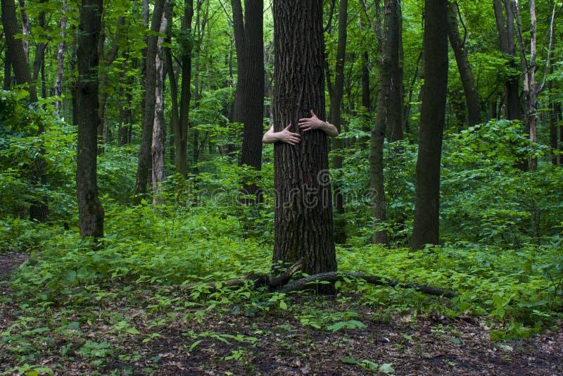 krama treen Närbild av händer som kramar träd a arkivfoto