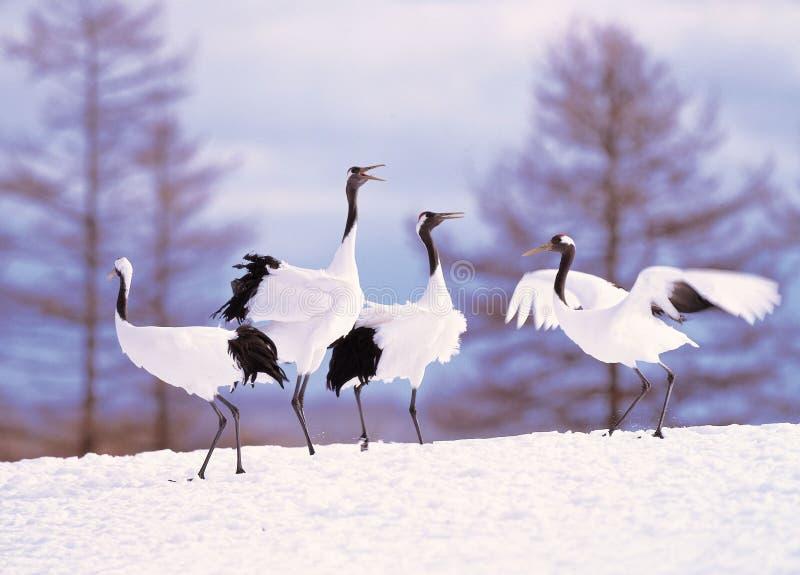Kran Im Winter Stockfoto