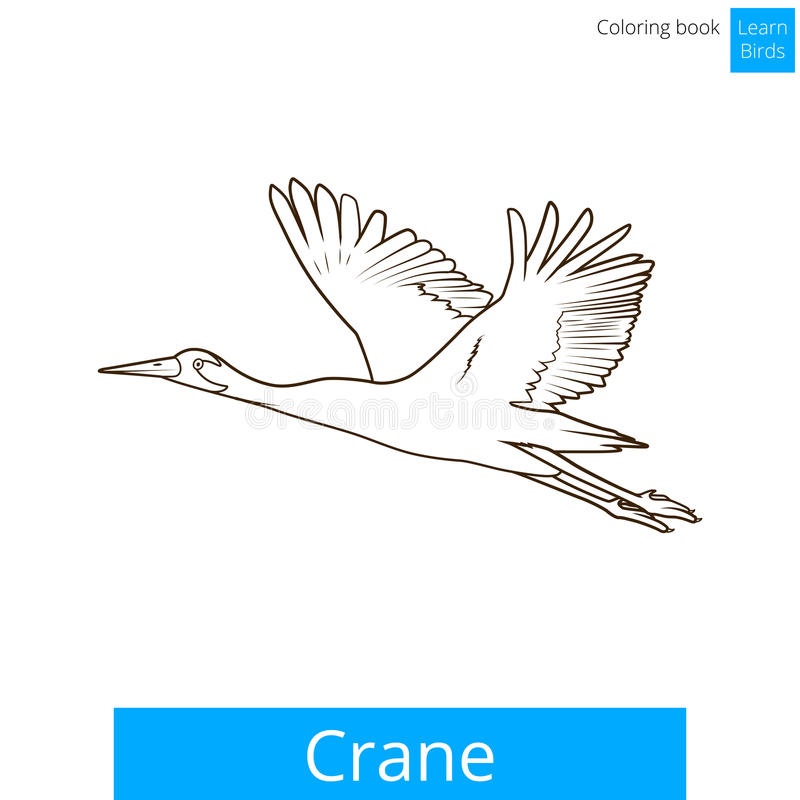 Kranfågeln lär vektorn för fågelfärgläggningboken stock illustrationer