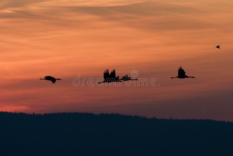 krangryningflyg fotografering för bildbyråer
