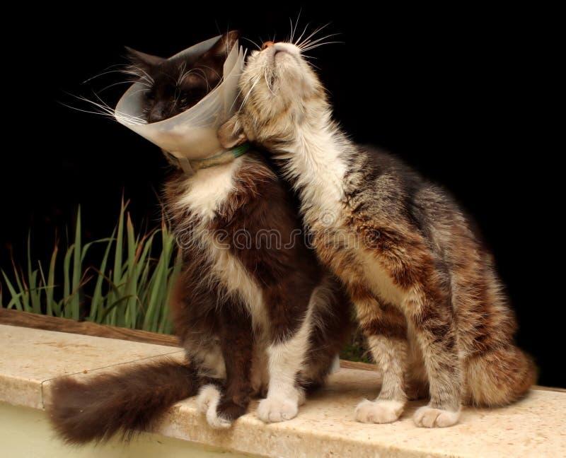 Kranke Katze lizenzfreie stockbilder