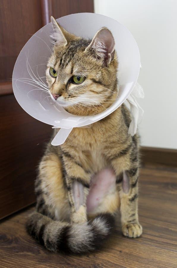 Kranke Katze mit Kragen lizenzfreie stockfotos