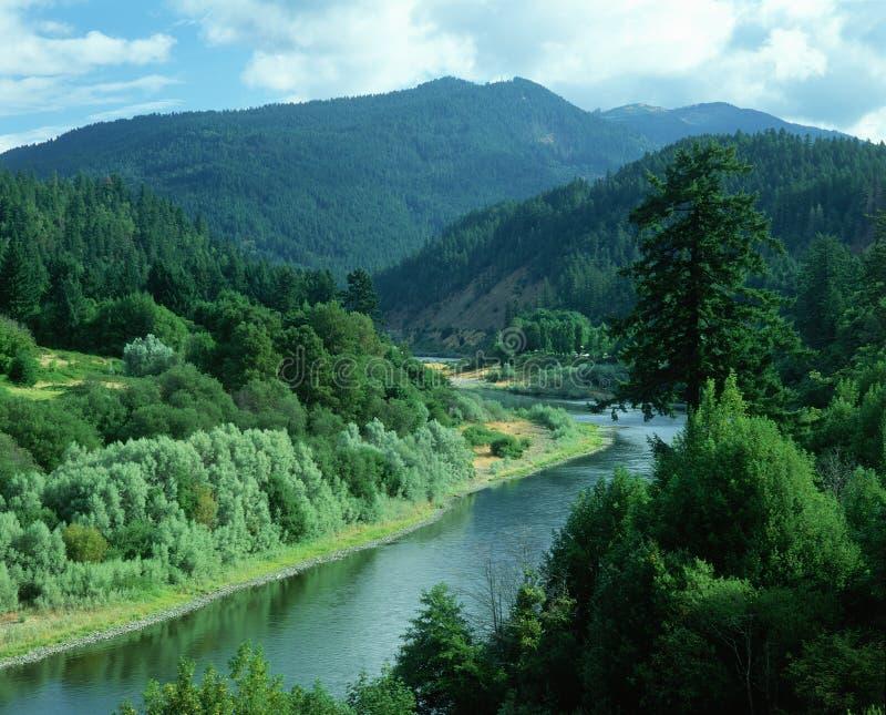 Kranke Pflanzen entfernter Fluss ODER stockbilder