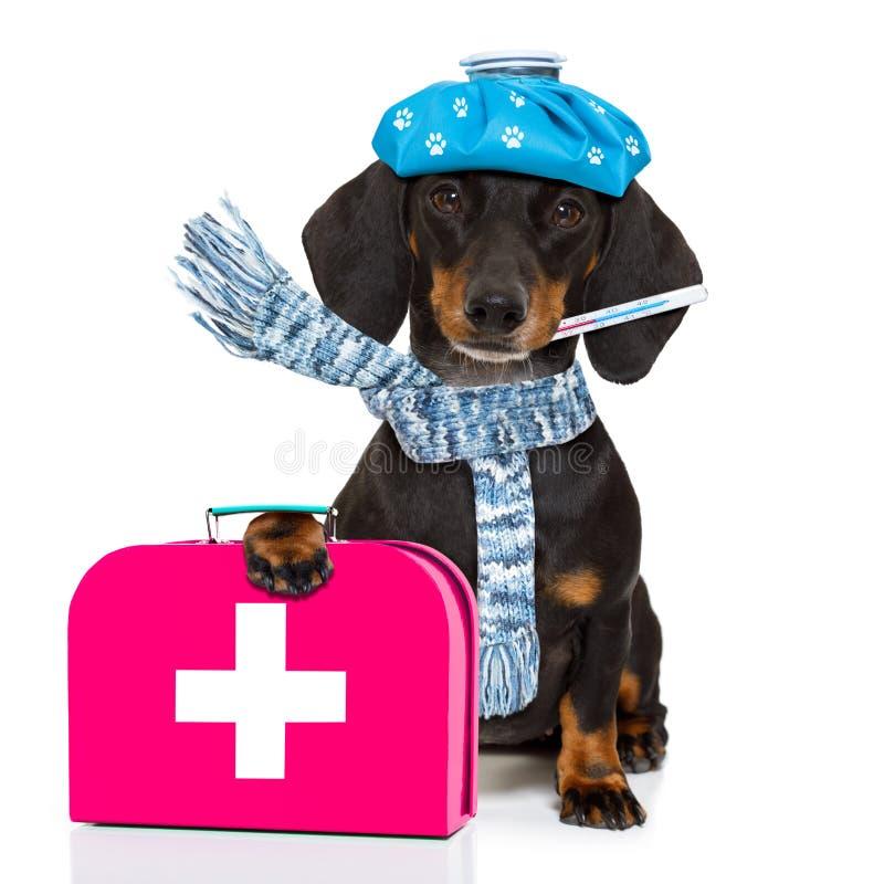 Kranker kranker Hund mit Krankheit stockfotografie