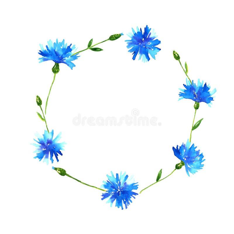 Krans med blåklinter Rund ram med blåa härliga blommor Hand dragen vattenf?rgillustration bakgrund isolerad white royaltyfri illustrationer