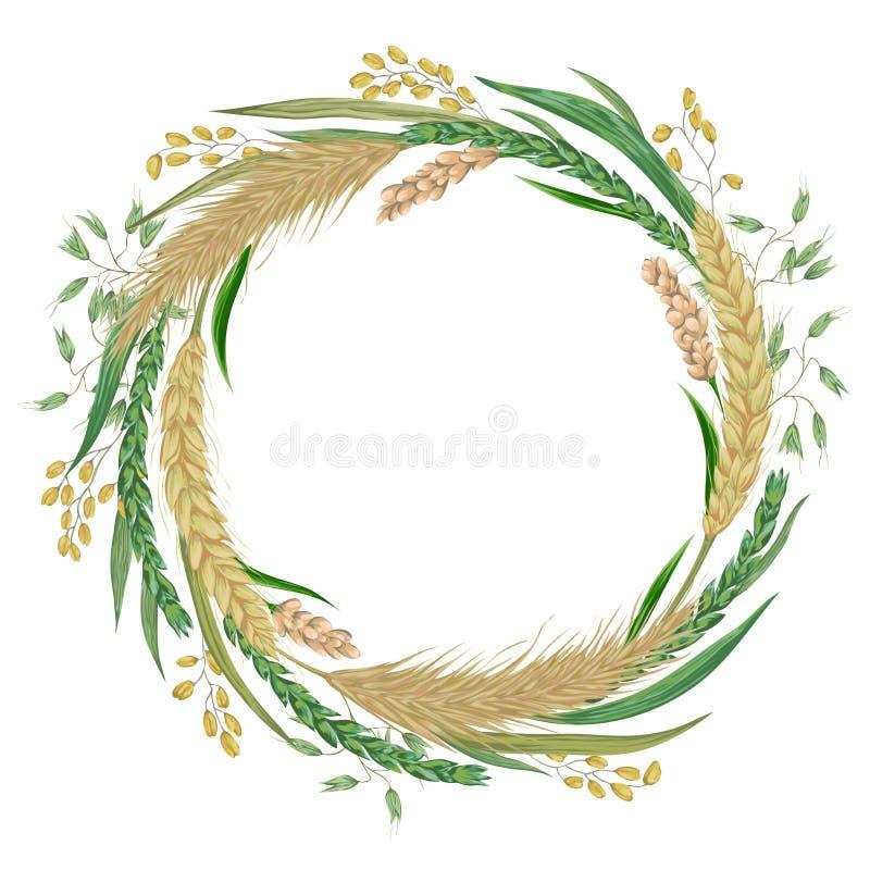 Krans med sädesslag Korn, vete, råg, ris, hirs och havre Beståndsdelar för blom- design för samling dekorativa stock illustrationer