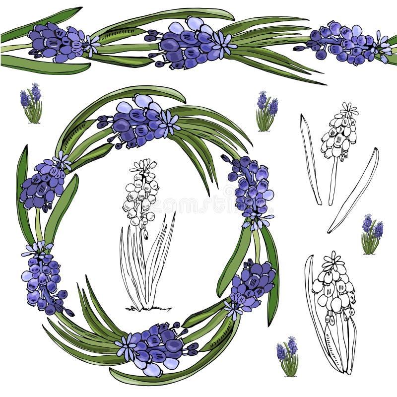 Krans och ändlös borste med knoppar och sidor av den violetta muscarien Handen dragen monokrom och färg skissar med sping blommor royaltyfri illustrationer