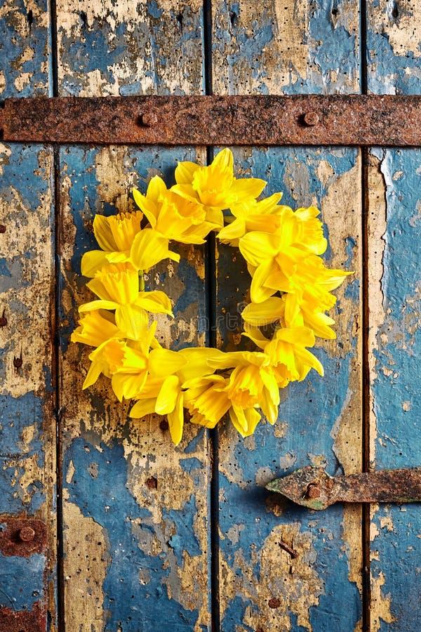 Kranz von gelben Narzissen auf verwitterter hölzerner Tür stockfotos