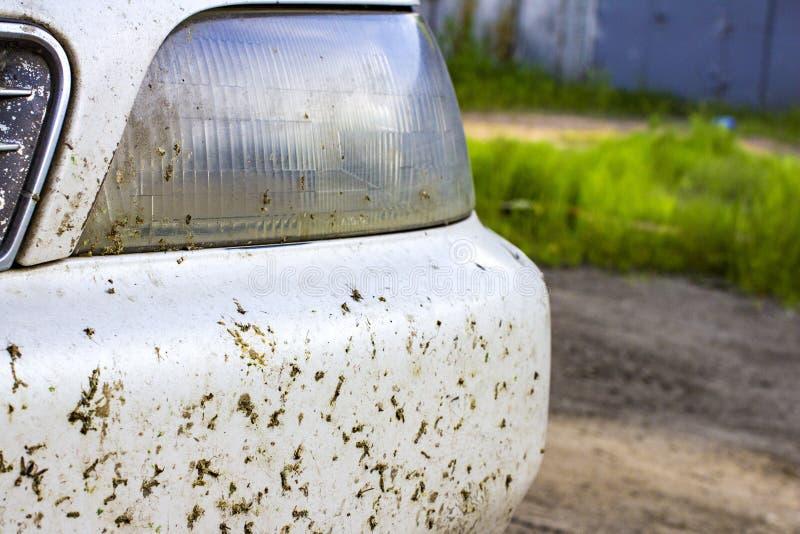 Kraschat kryp på det bilstötdämparen och elementet Krossa myggorna och knott på framdelen av medlet royaltyfri bild