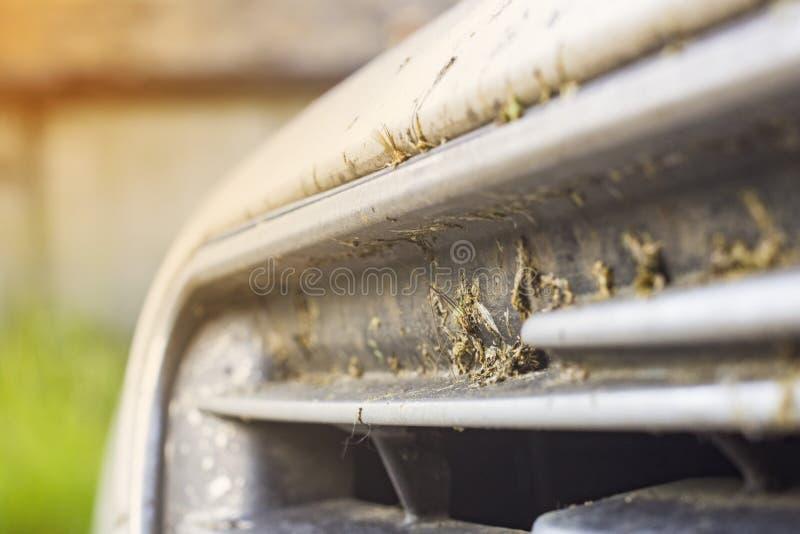 Kraschat kryp på det bilstötdämparen och elementet Krossa myggorna och knott på framdelen av medlet royaltyfri foto