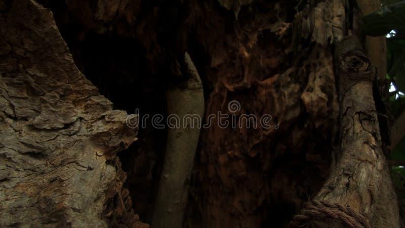 Kraschat område för Banyanträd arkivfoton