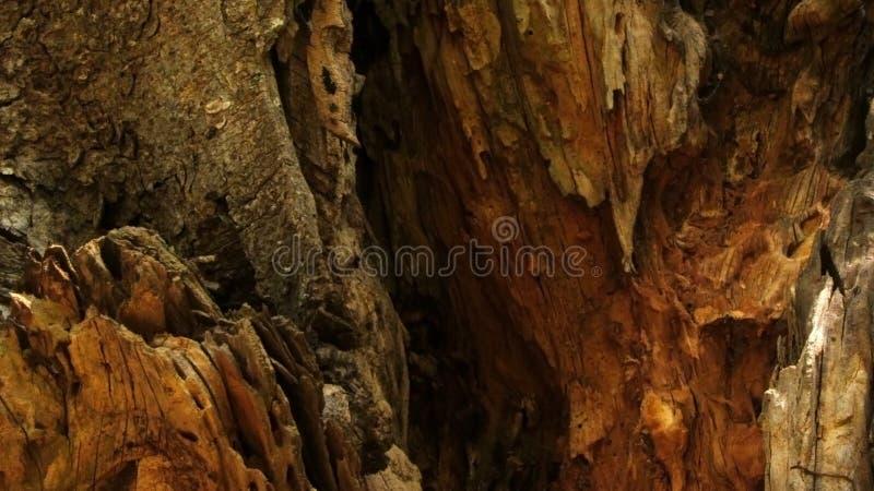 Kraschat område för Banyanträd royaltyfri foto