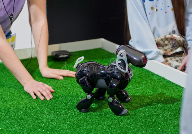 Krasnodar, Rússia, em março de 2019: festival dos robôs O cão AIBO do robô executa comandos fotografia de stock